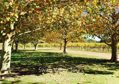 Swan Valley Tours 5