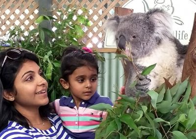 Koalas and Australian Native Animals