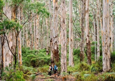 Walking through Baranup Forest